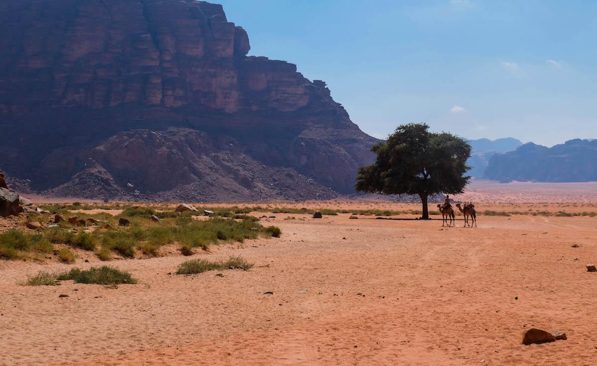 Desert Wadi Rum jordanie