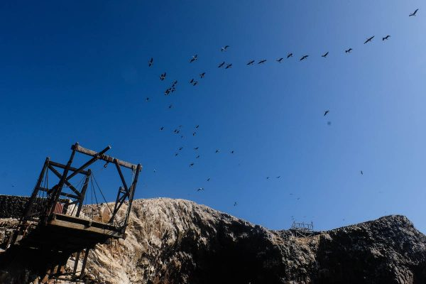 oiseaux islas ballestas
