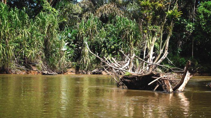 costa rica bateau tortuguero fleuve